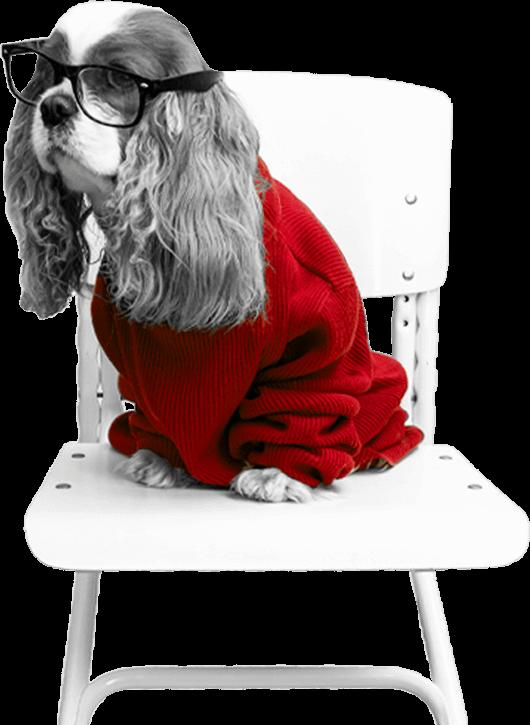 Reg Peg Puppy